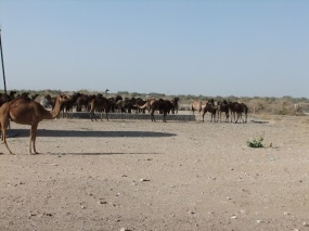 On the road to Jaisalmer