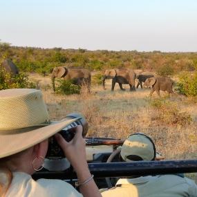 Mashatu Elephants