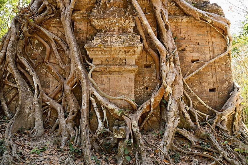 Strangler vines are all that are holding this temple together I think