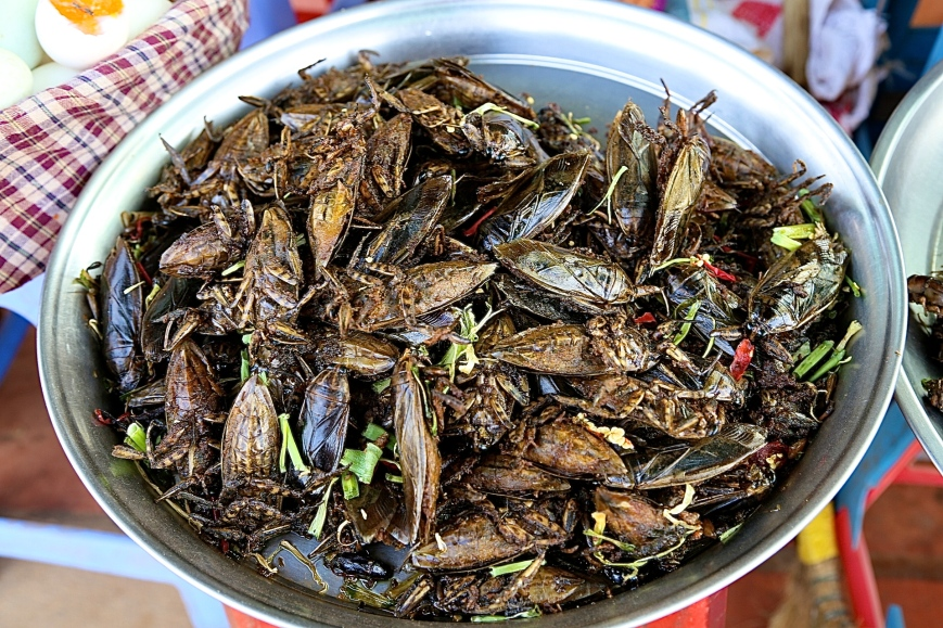 Giant fried cockroaches
